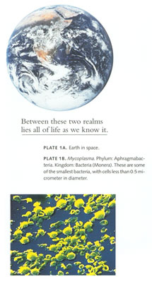 BETWEEN-THESE-TWO-REALMS-LIES